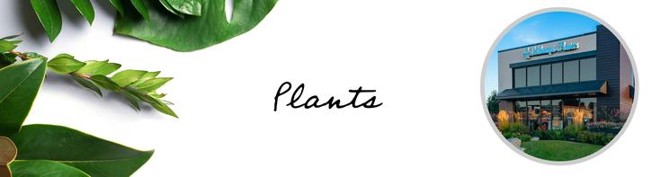 Plants Denver Colorado
