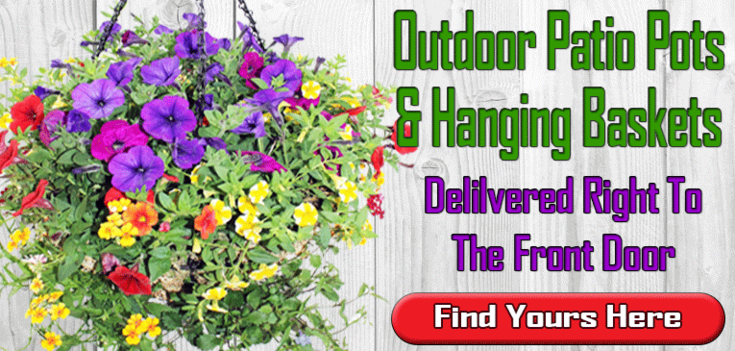 Outdoor Hanging Baskets and Patio Pots, Veldkamp's Outdoor Hanging Baskets and Patio Pots, Denver Florist Outdoor Hanging Baskets and Patio Pots