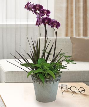Deluxe Orchid Garden