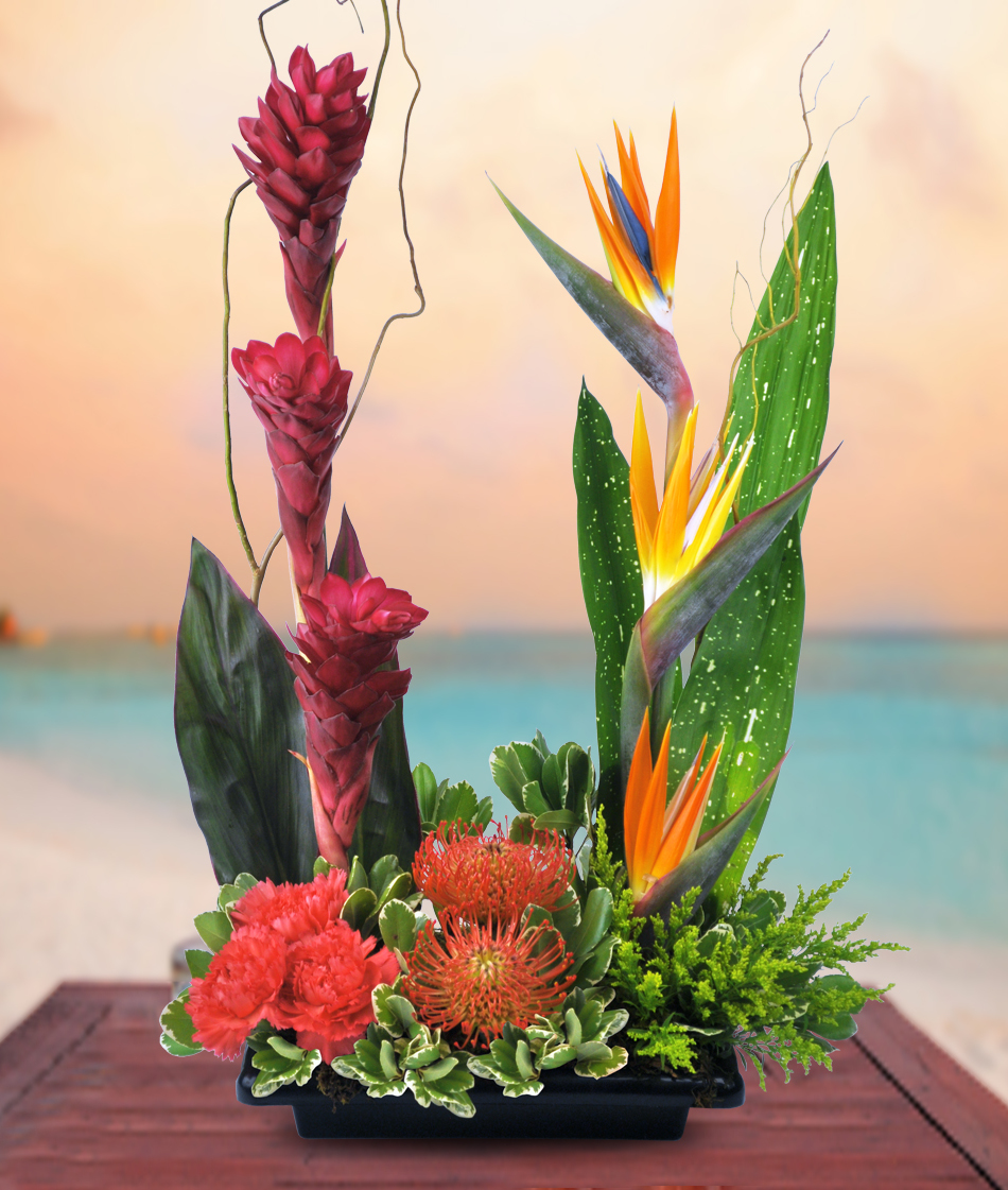 Exotic Tropical Flower Arrangements Denver Colorado Veldkamps